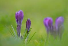 Frühlingsblühende pflanzen stockfoto