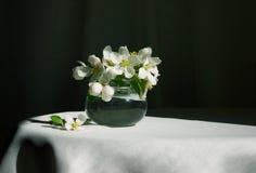 Frühlingsblüte Lizenzfreie Stockbilder