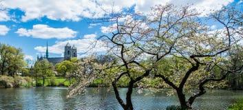 Frühlingsblüte Stockbild
