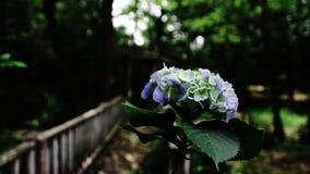 Frühlingsblüte Stockfotos