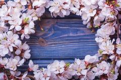 Frühlingsblüte blüht Aprikose auf blauem hölzernem Hintergrund Lizenzfreie Stockbilder