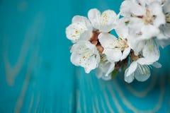 Frühlingsblüte blüht Aprikose auf blauem hölzernem Hintergrund Lizenzfreie Stockfotografie