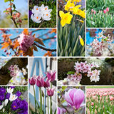 Frühlingsblüte blüht Collage Lizenzfreies Stockbild