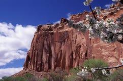 Frühlingsblüte in den Schluchten von Utah Stockfoto