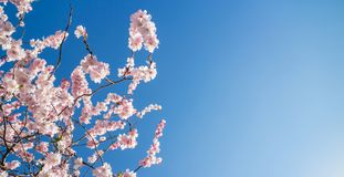Frühlingsblüte gegen tiefen blauen Himmel stockbilder