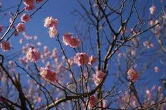 Frühlingsblüten Lizenzfreies Stockbild