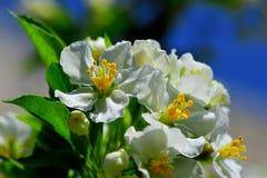 Frühlingsblüten Stockbilder