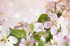 Frühlingsblüten gegen rosa Hintergrund Stockbild