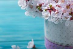 Frühlingsblütenblumen-Kastenaprikose auf blauem hölzernem Hintergrund Lizenzfreies Stockbild