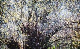 Frühlingsblütenstaub im Regen Stockfotos