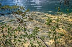 Frühlingsblütenstaubgruppe in einem Wasser Stockfoto