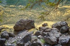 Frühlingsblütenstaubgruppe in einem Wasser Lizenzfreie Stockfotografie