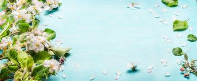 Frühlingsblütenzweige auf blauem Türkishintergrund, Draufsicht, Fahne frühjahr Stockfotografie