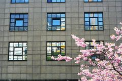 Frühlingsblaufenster stockfotografie