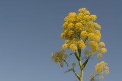 Frühlingsblume Stockfoto
