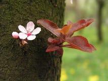 Frühlingsblume auf Baumbarke lizenzfreies stockbild