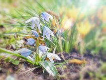 Frühlingsblume auf weichem Unschärfehintergrund mit Sonnenlicht Lizenzfreies Stockfoto