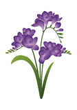 Frühlingsblume - Freesie Lizenzfreies Stockbild