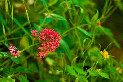 Frühlingsblume im Gras stockfoto
