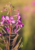 Frühlingsblume irgendwo im Holz Stockfoto