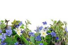 Frühlingsblumen stockfotos