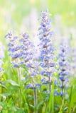 Frühlingsblumen Lizenzfreie Stockfotos