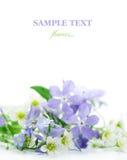 Frühlingsblumen Lizenzfreie Stockfotografie