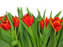 Frühlingsblumen. Lizenzfreie Stockfotografie