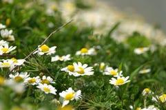 Frühlingsblumen Lizenzfreie Stockbilder
