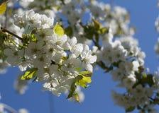 Frühlingsblumen Lizenzfreies Stockfoto