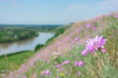Frühlingsblumen 7 Stockfotos