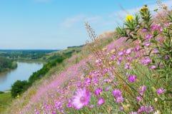 Frühlingsblumen 7 Stockbilder