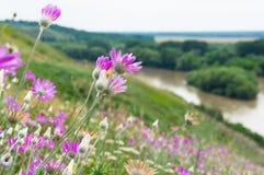 Frühlingsblumen 7 Stockbild