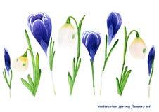 Frühlingsblumen Aquarellsatz Krokus-und Schneeglöckchen Gestaltungselemente für Hintergrund, Fahne, Feiertagskartendesign stock abbildung