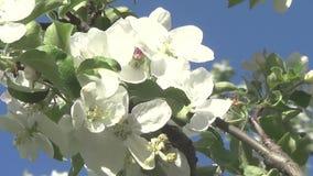 Frühlingsblumen auf Bäumen stock video