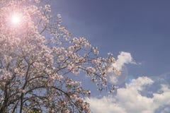 Frühlingsblumen auf Baum gegen blauen Himmel Stockbild
