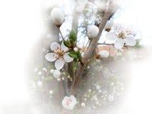 Frühlingsblumen auf einem Baumast Stockbilder