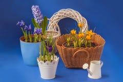 Frühlingsblumen auf einem blauen Hintergrund Lizenzfreies Stockbild