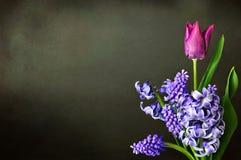 Frühlingsblumen auf Schmutzhintergrund Stockbild