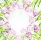 Frühlingsblumen auf weißem Hintergrund Rosafarbenes Tulpefeld lizenzfreie stockfotografie
