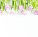 Frühlingsblumen auf weißem Hintergrund Zacken Sie Tulpen aus lizenzfreies stockfoto