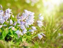 Frühlingsblumen auf weichem Unschärfehintergrund draußen Lizenzfreie Stockfotografie