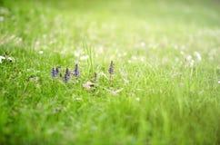 Frühlingsblumen in der schönen Rasenfläche Stockfotos
