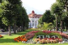 Frühlingsblumen in der Tschechischen Republik stockbilder