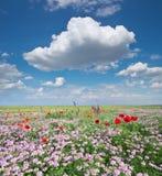 Frühlingsblumen in der Wiese Stockbild