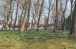 Frühlingsblumen, die in einem städtischen Park blühen lizenzfreies stockfoto