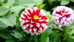 Frühlingsblumen, die im Stadtpark blühen Stockfotos