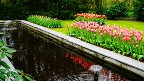 Frühlingsblumen: ein Wasserteich umgeben mit den rosa und orange Tulpen Stockbilder