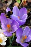 Frühlingsblumen in einem Garten. Stockfoto