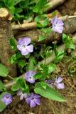 Frühlingsblumen in einem Garten. Stockbilder
